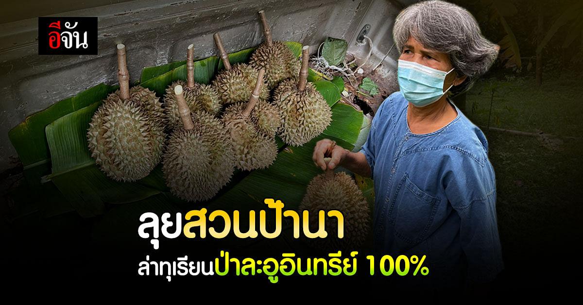 (Video) ไม่ใส่ใจไม่ได้กิน ทุเรียนป่าละอูอินทรีย์ 100%