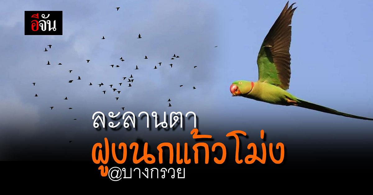 แห่แชร์ ฝูง นกแก้วโม่ง หลายสิบตัว เกาะต้นไม้ สายไฟ อย่างละลานตา