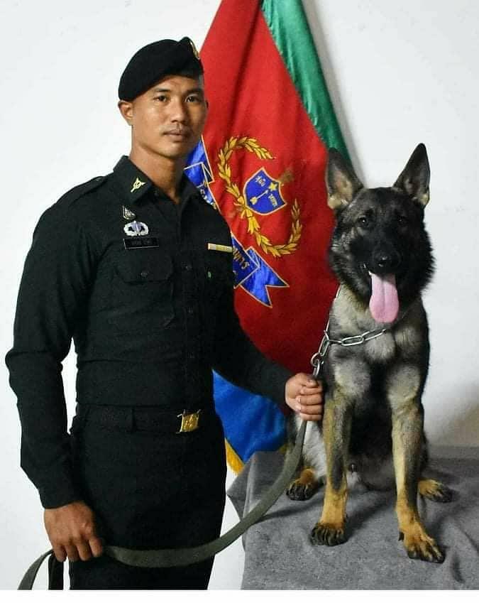 โลฮาน เป็นสุนัขทหาร เพศผู้ สายพันธุ์เยอรมันเชพเพิร์ด