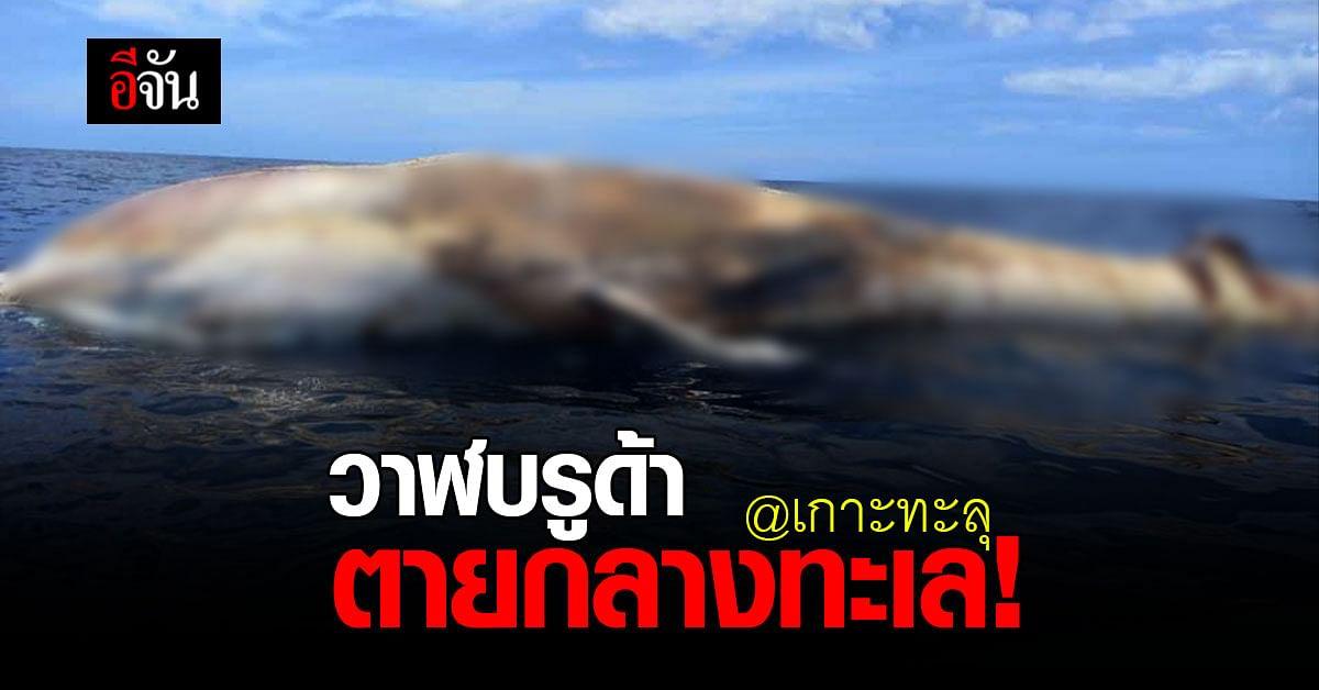 เศร้า! ประมงพบ วาฬบรูด้า ลอยตาย กลางทะเล เกาะทะลุ