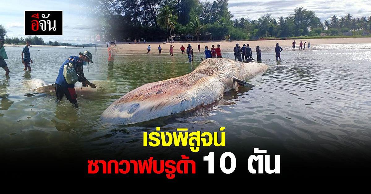 สัตวแพทย์ ยืนยัน ผลพิสูจน์ซาก วาฬบรูด้า เกาะทะลุ ตายธรรมชาติ