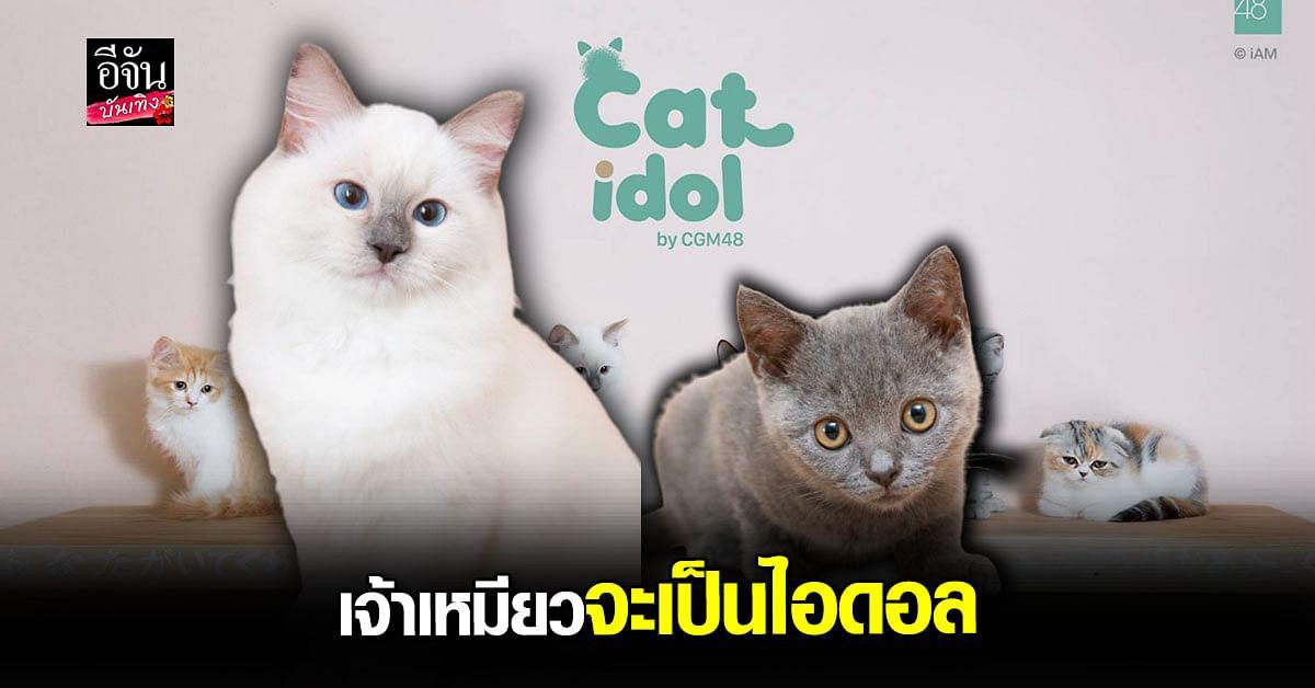 โปรเจกต์สุดเจ๋ง ปั้นน้องแมว ให้เป็นไอดอล