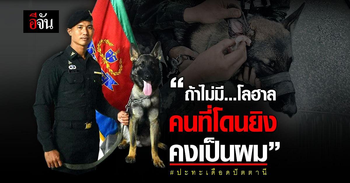 สุนัขทหาร ถูกยิง ช่วยชีวิตเจ้าหน้าที่ ปะทะเดือด อ.สายบุรี ปัตตานี