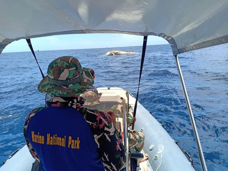 เจ้าหน้าที่อุทยานแห่งชาติ ได้เร่งกู้ซาก วาฬวาฬบรูด้า