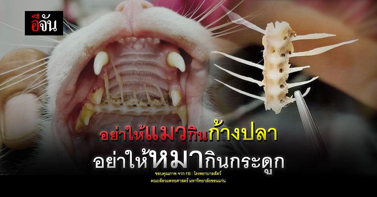 รักหมารักแมว อย่าให้น้อง กินก้าง กินกระดูก