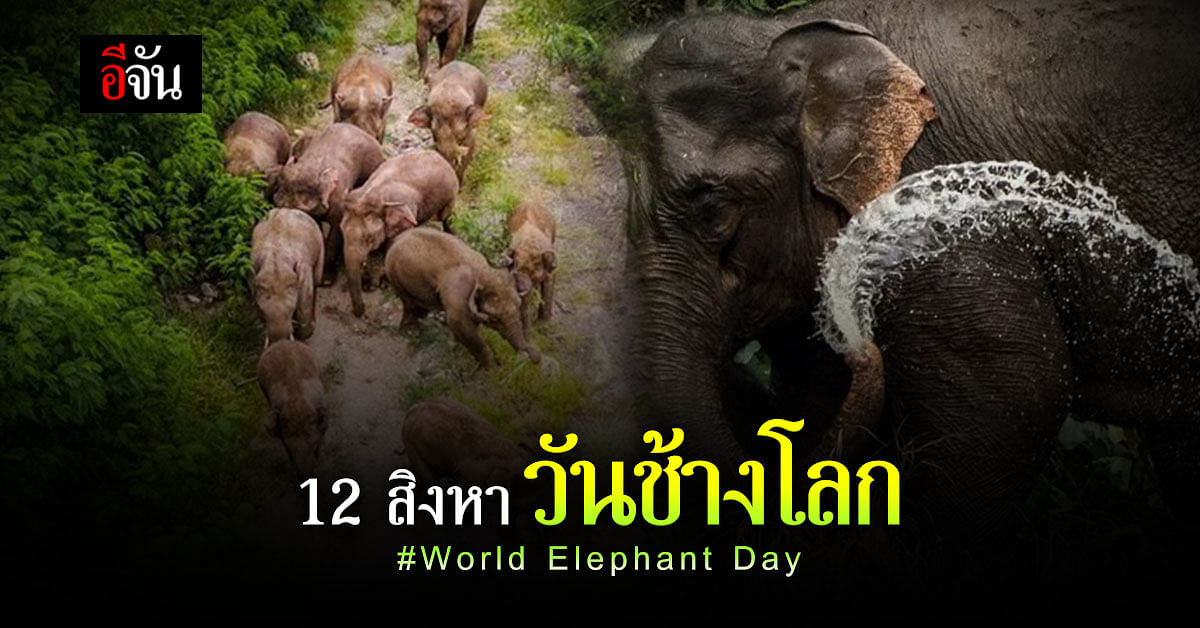 World Elephant Day วันช้างโลก ย้อนดูความน่าเอ็นดู ของเจ้าตัวโตกัน