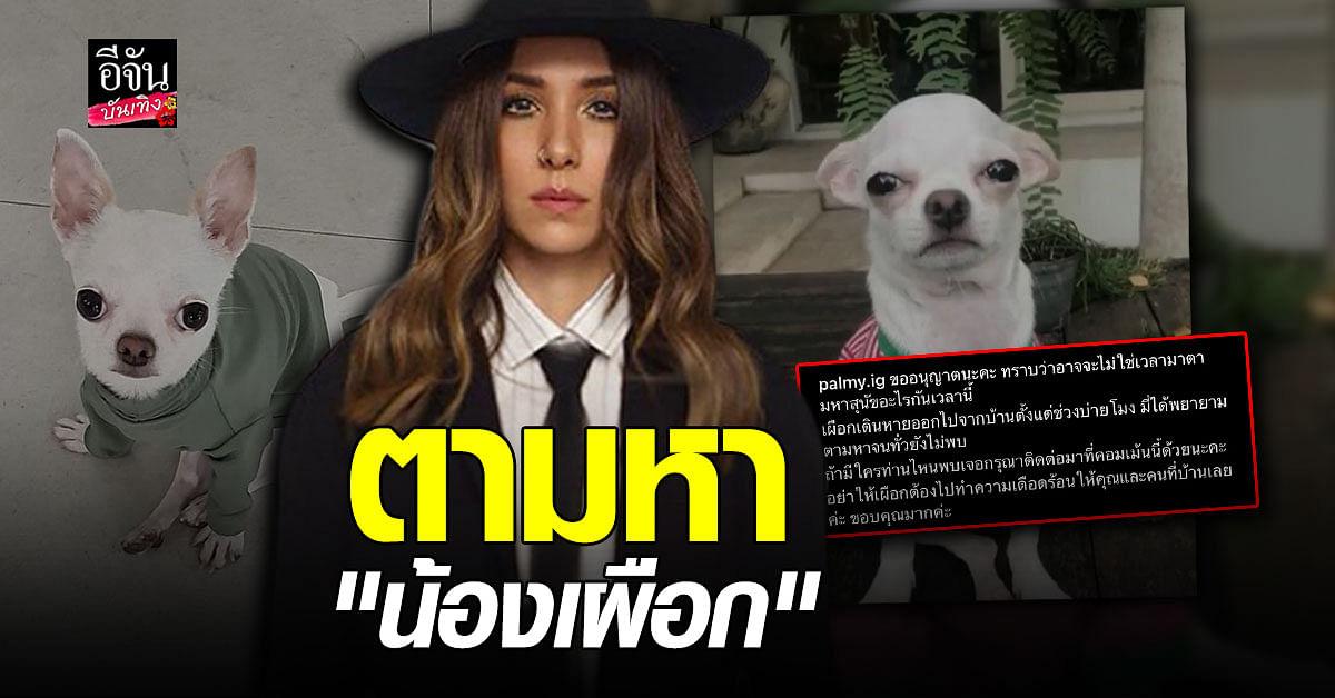 ยังไม่เจอ ปาล์มมี่ ประกาศหา สุนัขหาย ด้าน อั้ม-ตั๊ก ช่วยโพสต์หาอีกแรง