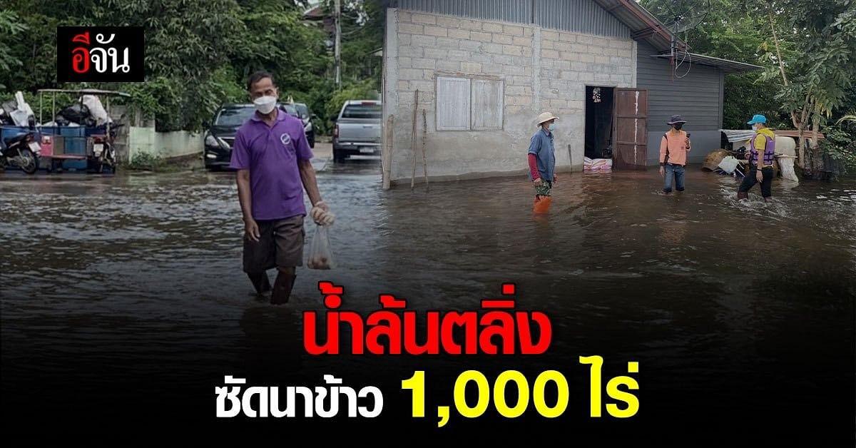 บ้านลำเชิงไกร โคราช น้ำล้นตลิ่งท่วมที่นาชาวบ้านกว่า 1,000 ไร่