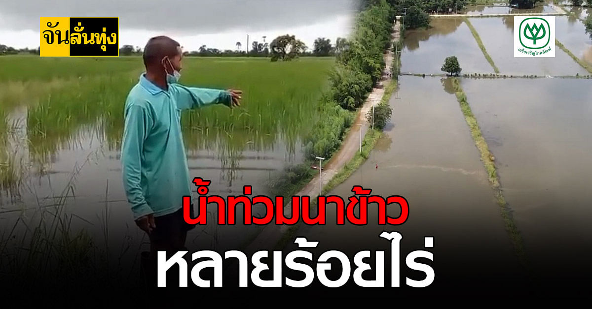 โคราช น้ำท่วมนาข้าวชาวบ้าน หลายร้อยไร่