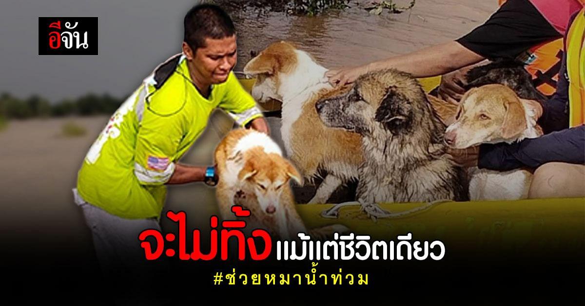 กู้ภัยพายเรือ พาทั้งคนทั้งหมา หนีตายน้ำท่วม