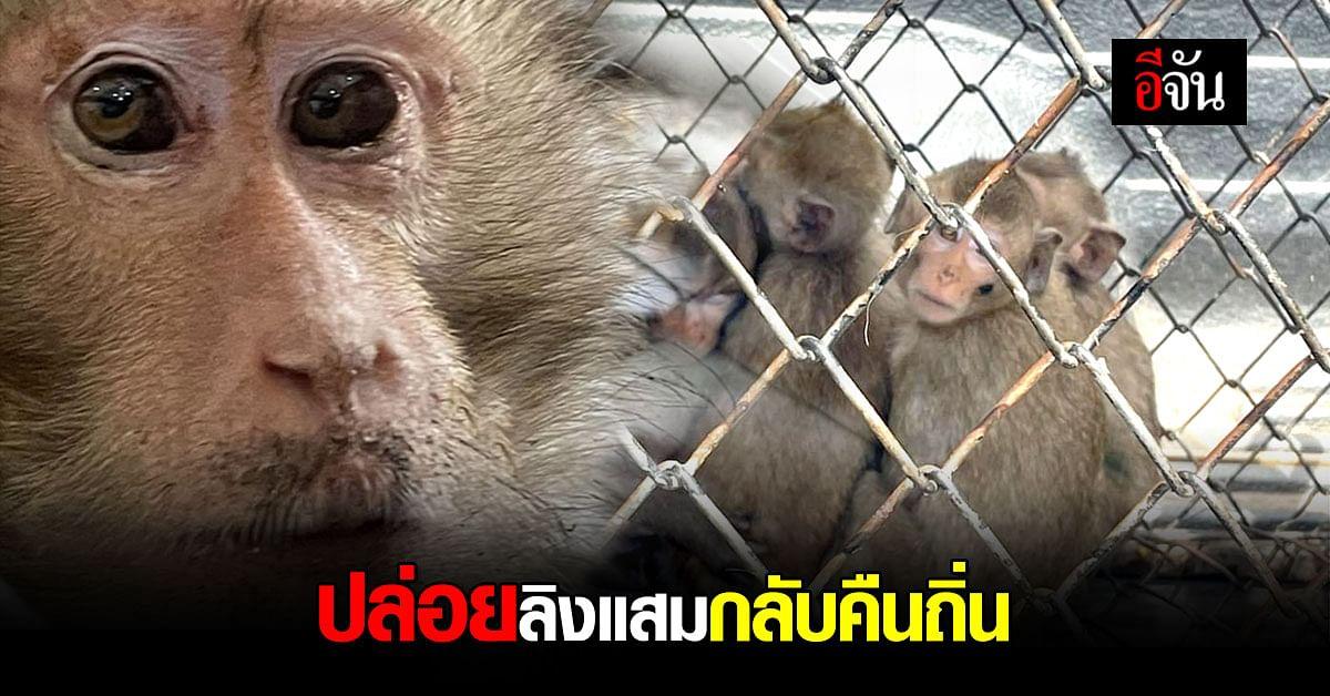 ปล่อยลิงแสม ถูกลอบจับ กลับคืนถิ่น