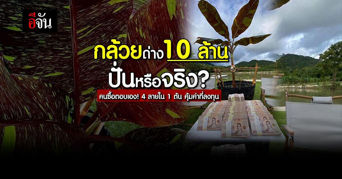 คนซื้อตอบชัด! กล้วยด่าง 10 ล้าน ปั่นหรือไม่ปั่น?