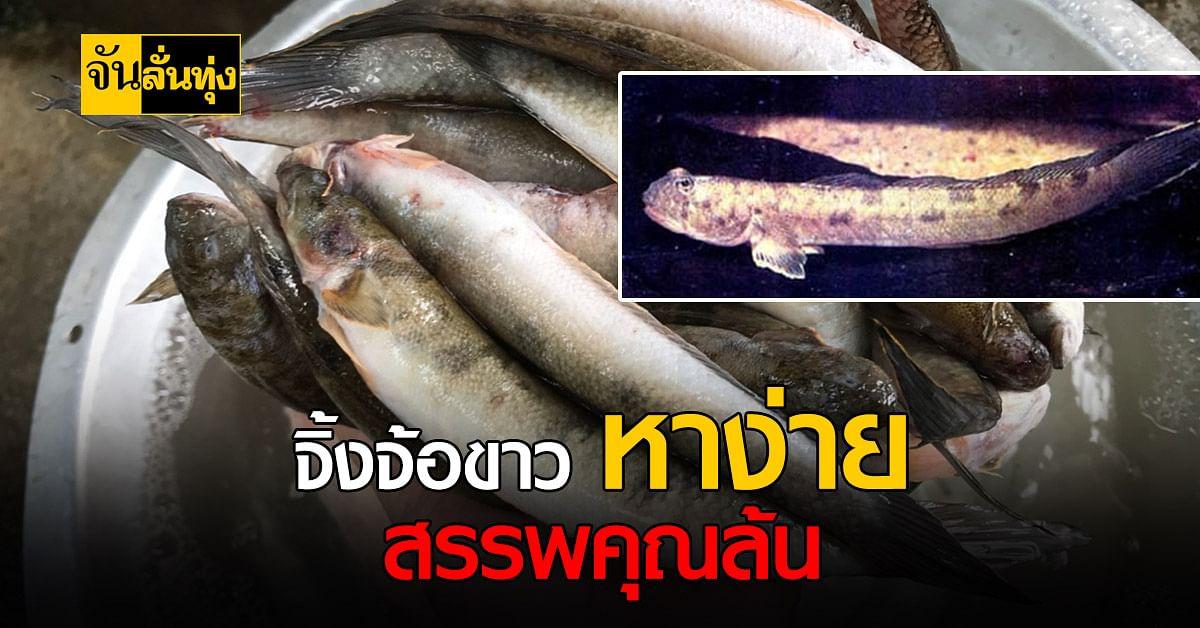 ปลาท่องเที่ยว ปลาท้องถิ่น จ.สงขลา หาง่าย รสชาติอร่อย