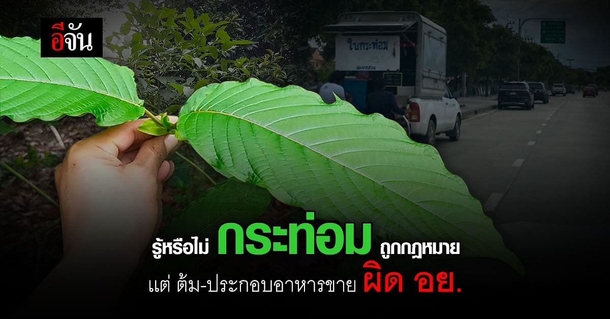 โฆษกตำรวจ เตือน พืชกระท่อม ถูกกฎหมาย เเต่ ต้ม - ประกอบอาหารขาย ผิด อย.