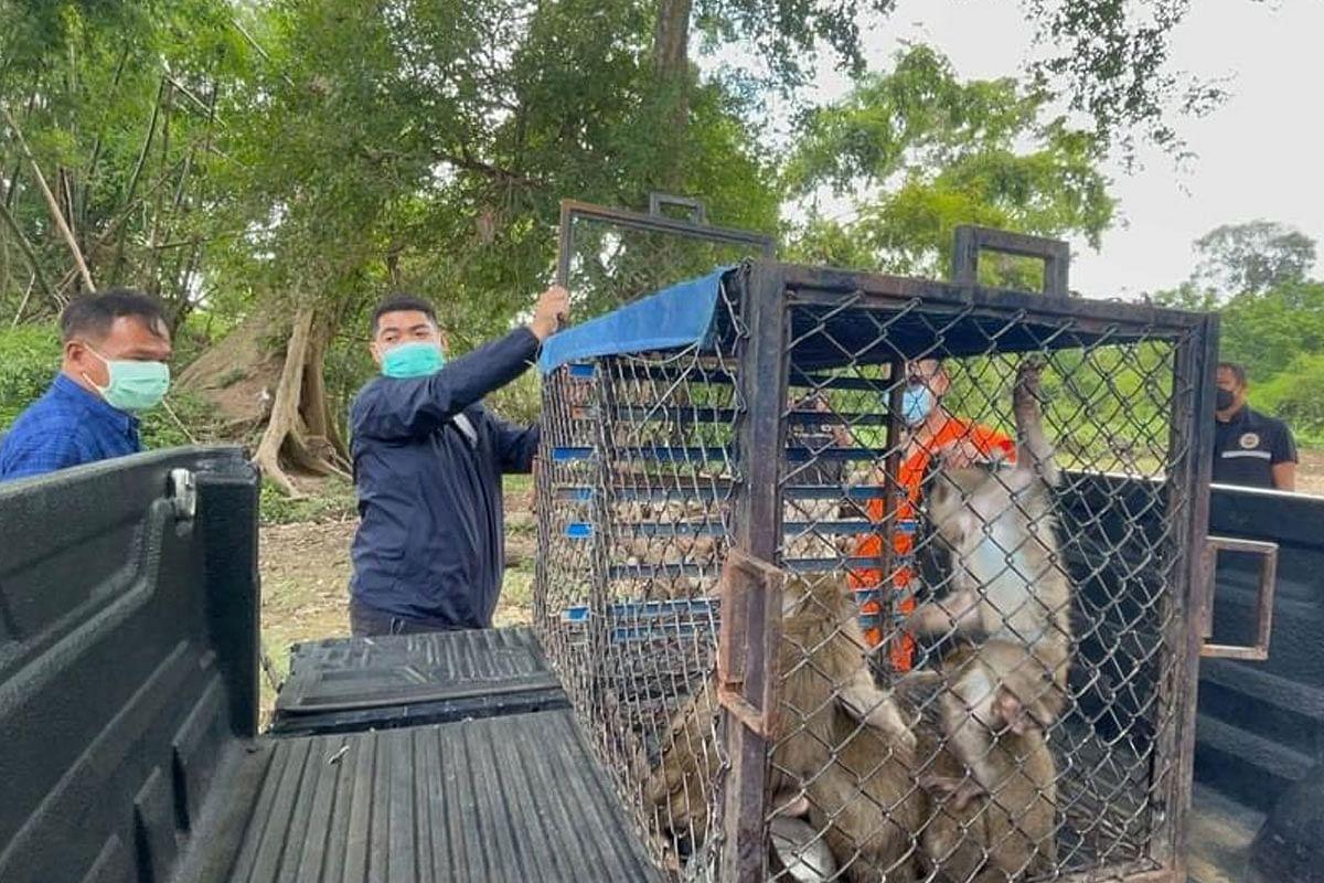 ขอบคุณภาพ ประชาสัมพันธ์ กรมอุทยานแห่งชาตื สัตว์ป่าและพันธุ์พืช
