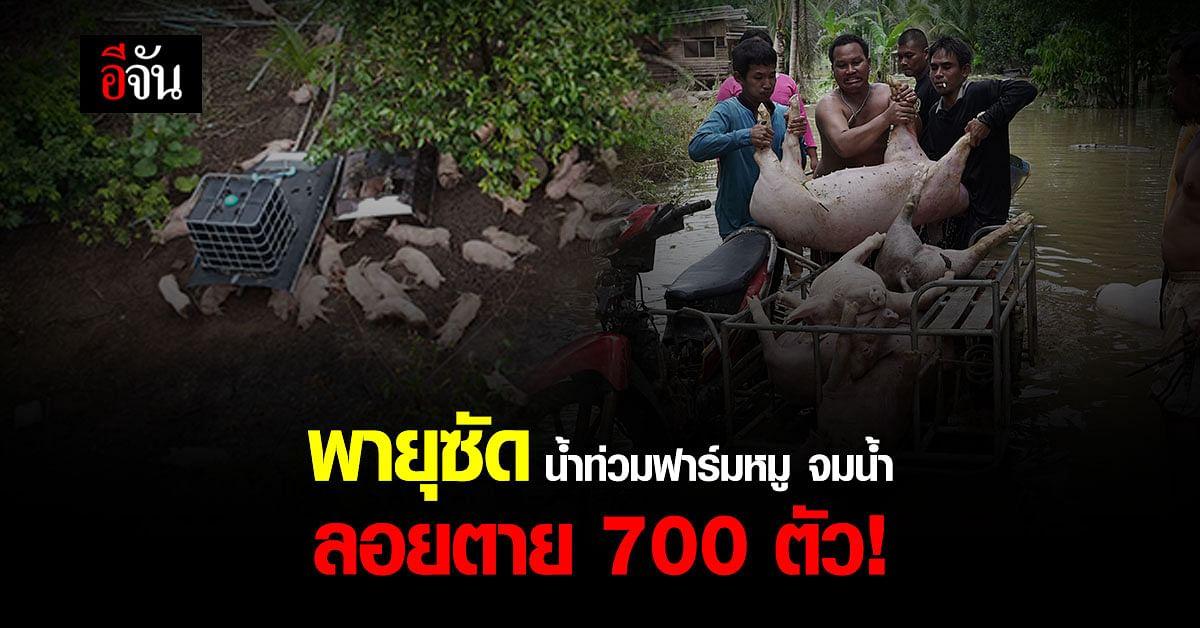 พายุฝนซัดกระหน่ำเมืองตราด น้ำป่าไหลหลาก ท่วมฟาร์มหมู เสียหายหลายล้าน
