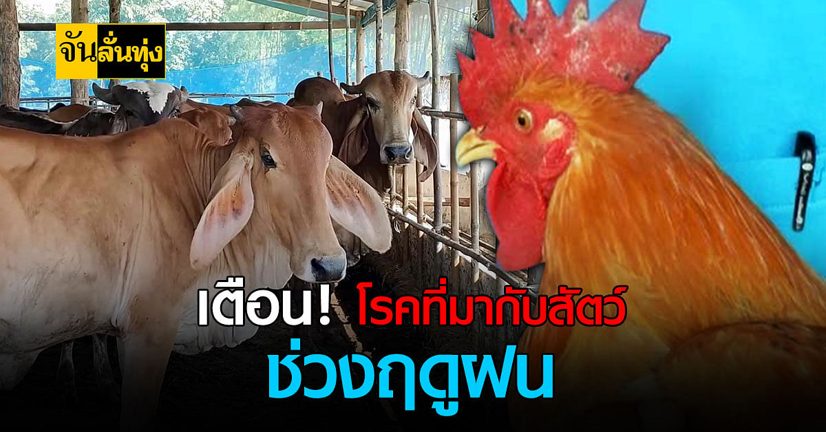 เตือน โรคสัตว์ ที่เกษตรกรต้องระวังช่วงหน้าฝน