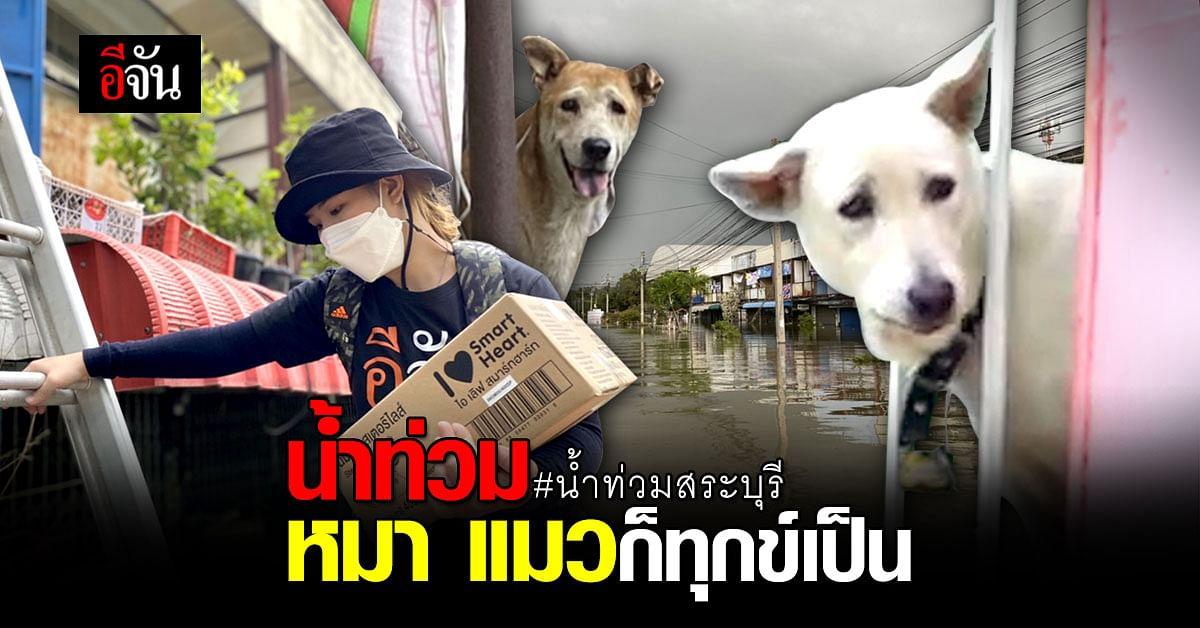 เดือดร้อนไม่แพ้กัน! หมา แมว ผจญกับ น้ำท่วมสระบุรี