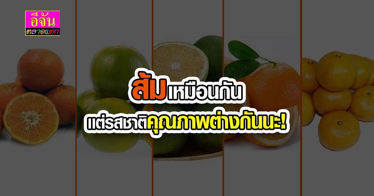 ส่องสายพันธุ์ ประโยชน์ ของส้มในไทย พันธุ์ไหนกินดี