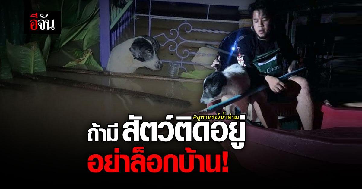 กู้ภัยชี้ ถ้ามีสัตว์อยู่ในบ้าน อย่าล็อกประตู การช่วยอาจยากขึ้น