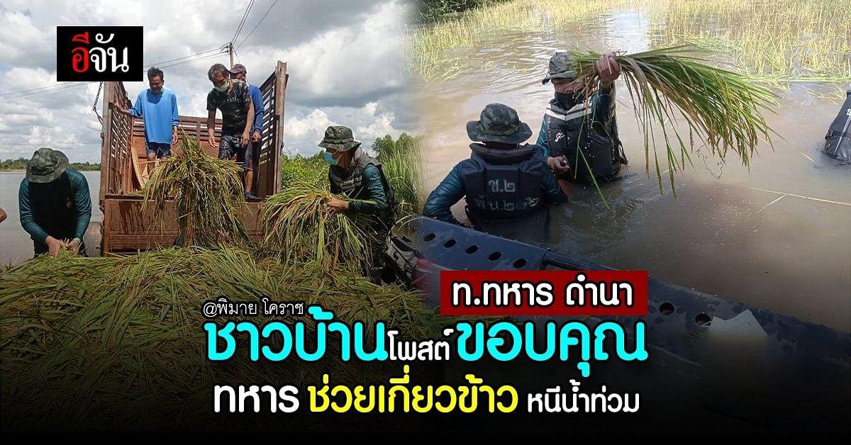 ชาวพิมาย โคราช ขอบคุณทหาร ช่วยเกี่ยวข้าว หนีน้ำท่วม