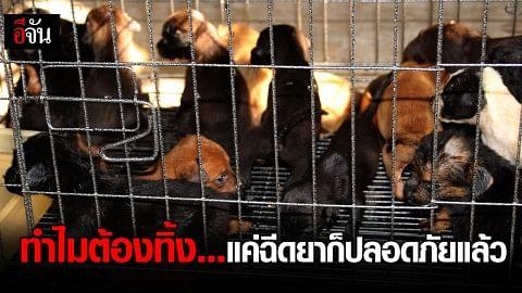 ชาวบ้านผวาพิษสุนัขบ้า ทิ้งลูกหมา แมว ให้ด่านกักกันสัตว์ รับภาระกว่า 1,000 ตัว