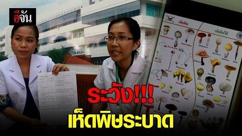 เเพทย์เตือน ระวัง!!! เห็ดพิษระบาด หน้าฝน