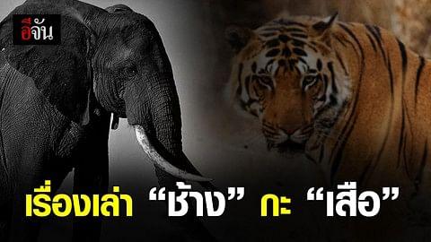 """เรื่องเล่า """"ช้าง"""" กะ """"เสือ"""""""