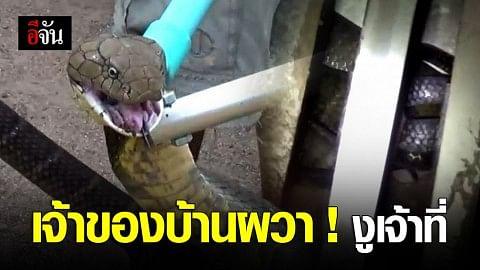 งูจงอางหิวโซ บุกเข้าเล้าไก่ โร่แจ้ง จนท. จับ ผวาเป็นงูเจ้าที่