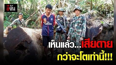 บุกจับชาวกัมพูชา ผู้ลักลอบตัดไม้กลางป่าปากตกห้วยดินดำ