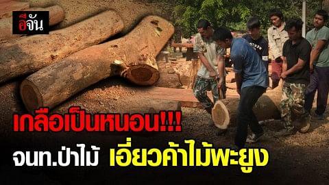 บุกทลายแก๊งค้าไม้พะยูง หลังตามสืบนาน 5 เดือน งานนี้เกลือเป็นหนอน!!