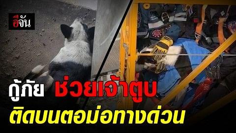 เจ้าหน้าที่ทางการพิเศษพร้อมทีมกู้ภัย เร่งช่วยสุนัขติดอยู่บนตอม่อทางด่วนออกมาได้อย่างปลอดภัย