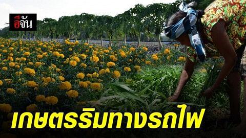 ชาวบ้าน บ้านปากคลอง ต.มะกอกเหนือ อ.ควนขนุน จ.พัทลุง เปลี่ยนที่ดินเปล่าเป็นแปลงเกษตร สร้างรายได้หลักแสนต่อเดือน