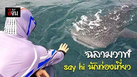 นักท่องเที่ยวตื่นเต้น! เจอฉลามวาฬ ใจดี ท้องทะเลสามร้อยยอด โผล่ข้างเรือด้วยท่าทีเป็นมิตร