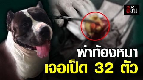 หมอโพสต์ ผ่าท้องช่วยหมาบูลลี่ เจอเป็ด 32 ตัว