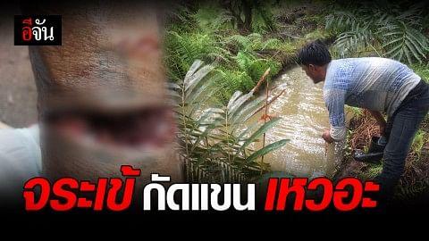 ผงะ! จระเข้โผล่ร่องน้ำสวนปาล์ม กัดแขนชาวบ้าน หวิดขาด