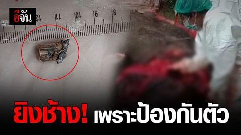 ช้างบุกสวนปาล์ม ถูกชาวบ้านยิงตาย!