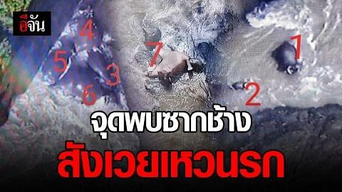 เปิดภาพสุดเวทนา จุดพบช้างป่าตาย 11 ตัว สังเวยน้ำตกเหวนรก