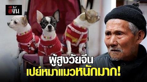 สังคมสูงวัยจีน นิยมเลี้ยงหมา-แมวเพิ่มขึ้น เปย์หนักเหมือนลูก
