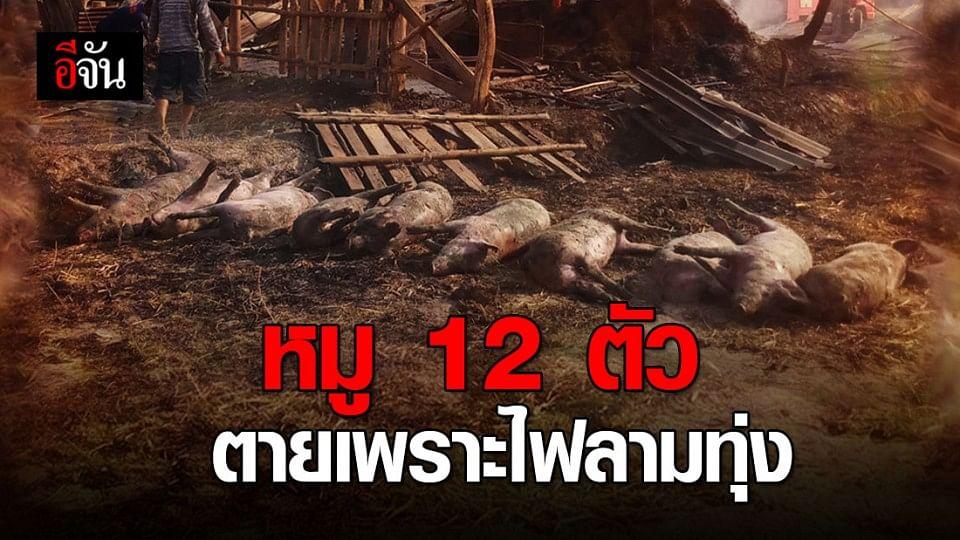 ไฟไหม้ทุ่งนา ลามเผาหมูตาย 12 ตัว