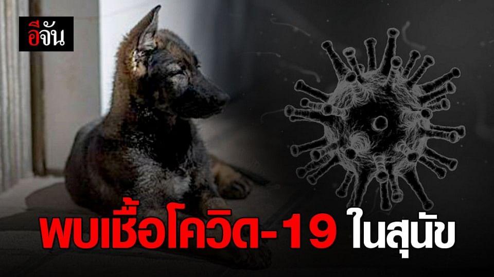 ฮ่องกงตรวจพบเชื้อโควิด-19 ระดับต่ำในสุนัข หลังเจ้าของป่วยโคโรนา