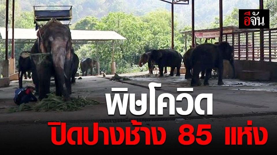 ปางช้างในเชียงใหม่ 85 แห่ง ปิดตัวลง เพราะโดนพิษโควิด-19 เล่นงาน