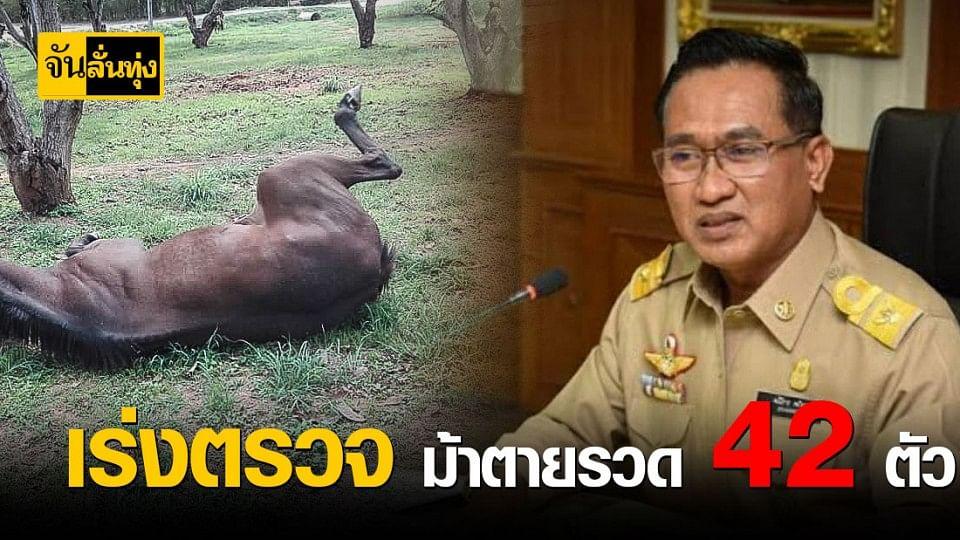 ปศุสัตว์เร่งตรวจเลือดหาเหตุม้าตาย 42 ตัว