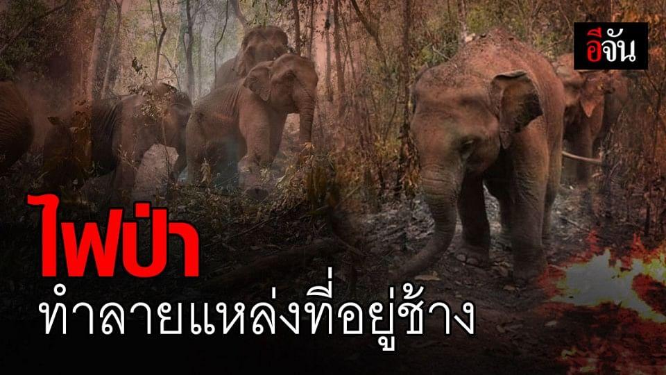 ภาพสะเทือนใจ! ไฟป่าทำลายแหล่งที่อยู่ช้างที่แม่แจ่ม จ.เชียงใหม่
