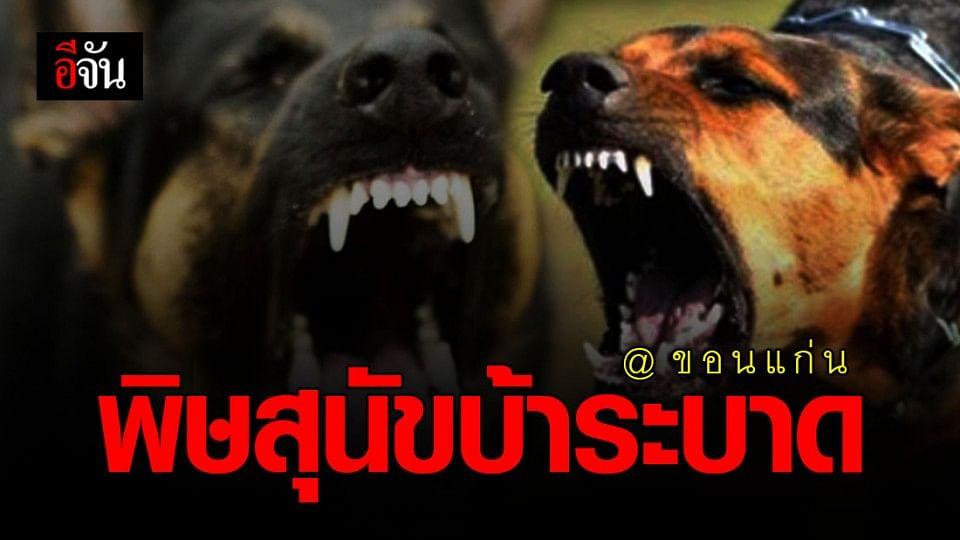 กรมควบคุมโรค เตือน อย่าเข้าใกล้หมา-แมว ที่ไม่มีเจ้าของ อาจติดเชื้อพิษสุนัขบ้า