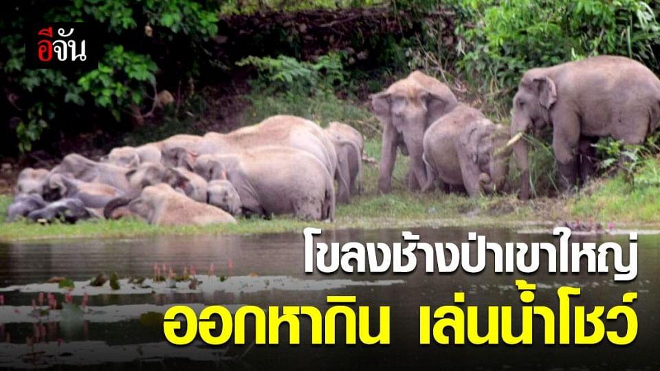 สุดน่ารัก! พี่ช้างเขาใหญ่ 28 ตัวออกหากิน เล่นน้ำโชว์ในเขต อ.เมือง จ.นครนายก