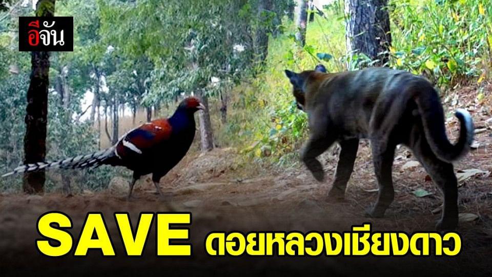 ช่วยกันรักษา ช่วยกันป้องกัน ดอยหลวงเชียงดาวบ้านของสัตว์ป่า