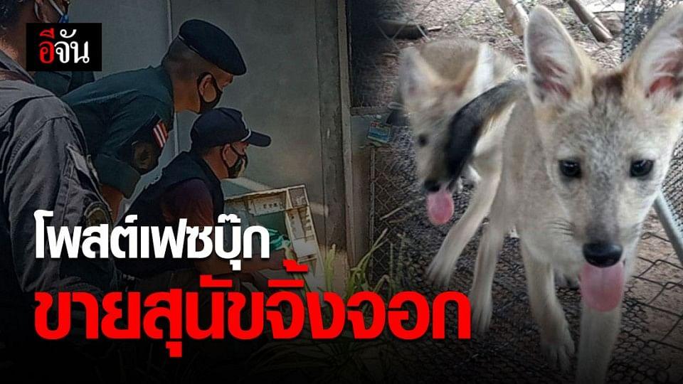 สัตว์ป่าต้องอยู่ในป่า! จับชายชาวสกลนครโพสต์ขายสุนัขจิ้งจอกผ่านเฟซบุ๊ก