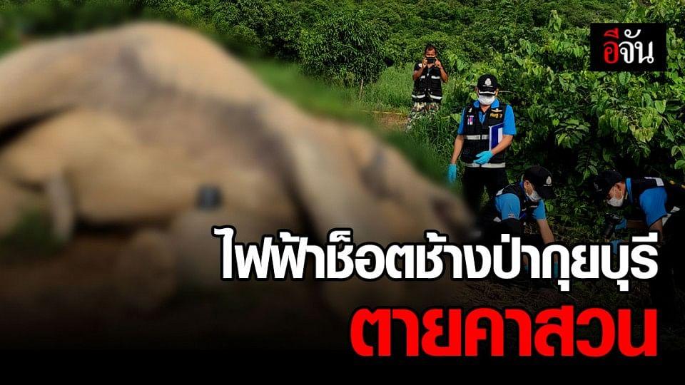 ช้างป่ากุยบุรีนอนตายกลางสวนมะม่วง คาดไฟฟ้าช็อต