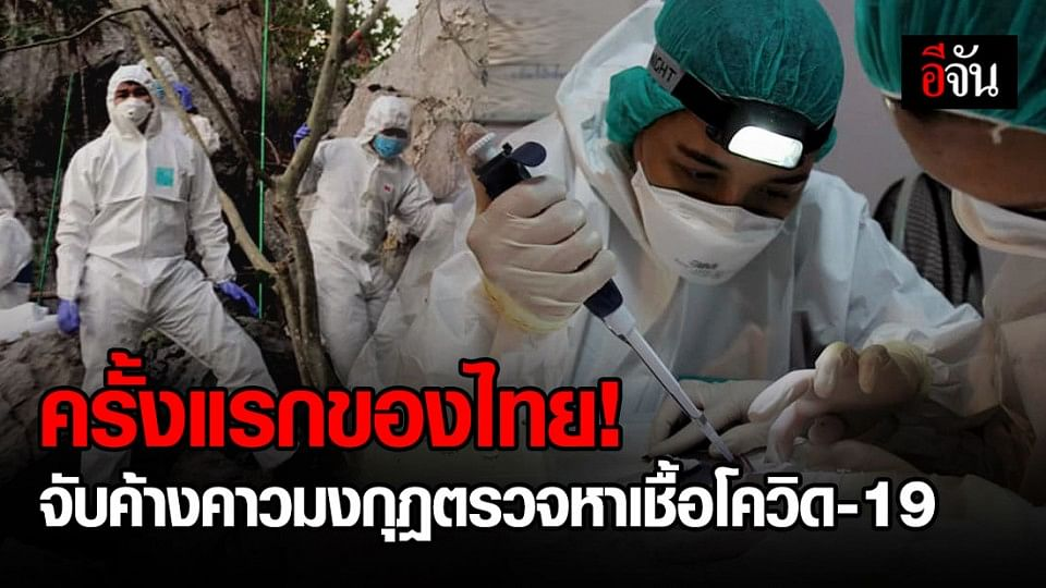 ครั้งแรกในไทย ลุยจับค้างคาวมุงกุฏในถ้ำกลางป่า จ.จันทบุรี หาเชื้อโควิด-19